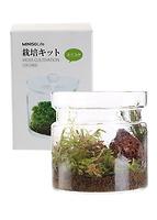 Cây cảnh trang trí (Small Flower Moss) 102113